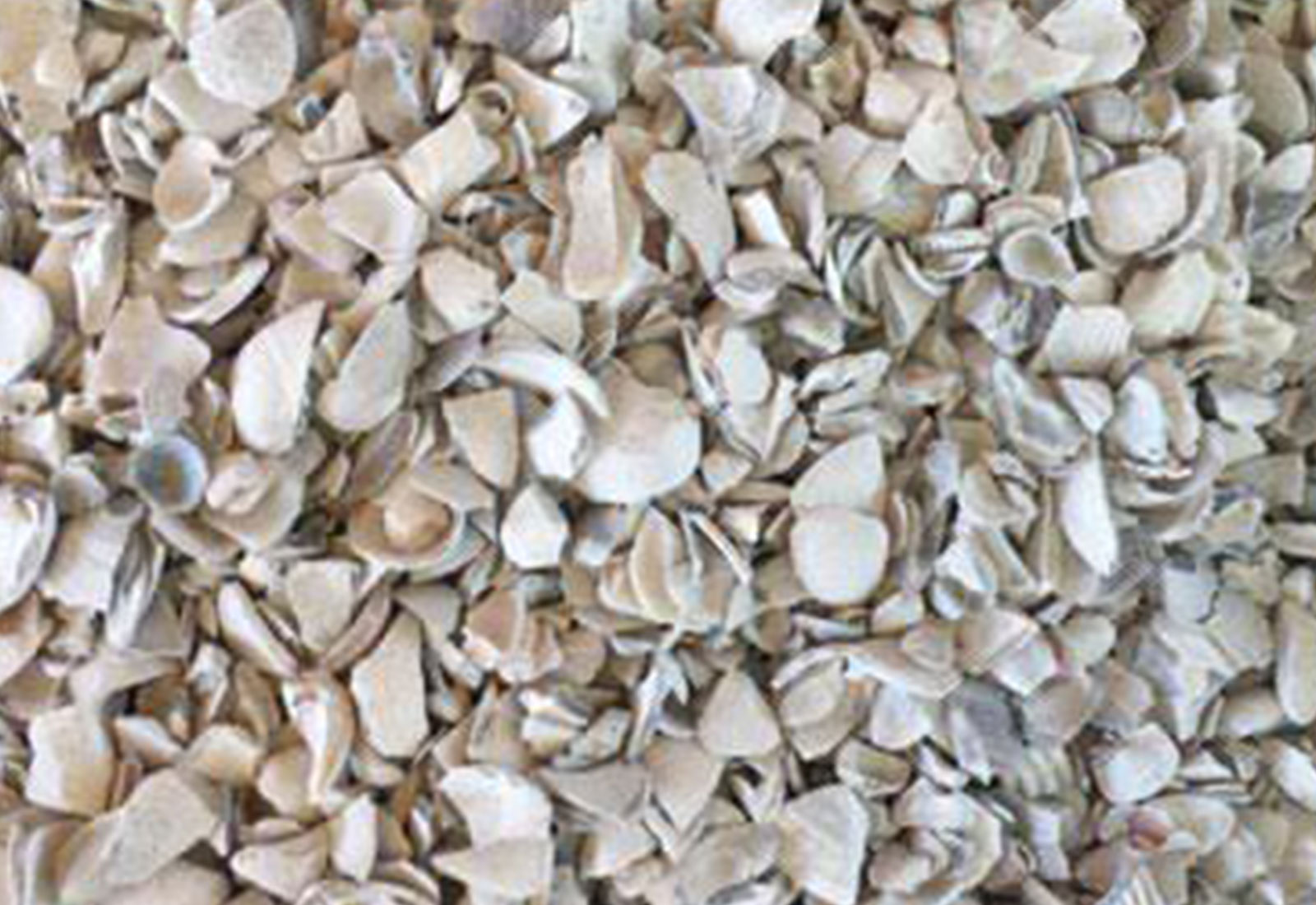 Oyster Shell Calcium Carbon | Caltron Clays